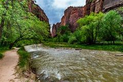 Natura w Zion parku narodowym, Utah obraz royalty free