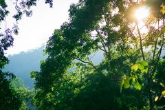 Natura widok zielony liść na zamazanym tle w ogródzie z kopii astronautyczny używać jako tła greenery rośliien naturalny krajobra Obraz Royalty Free