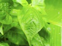 Natura widok zielony liść w ogródzie używać jako tapeta lub tło zdjęcia stock