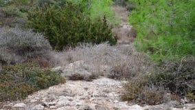 Natura wyspa Cypr - sosna i kamień lądujemy zbiory
