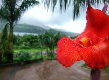 Natura z górami i czerwoną lelują obraz royalty free