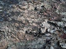 Natura z kolorowym szalunku tłem Obrazy Royalty Free