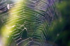 Natura, zakończenie w górę pająk sieci z rosa kropel zwolnionym tempem fotografia royalty free