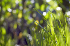 Natura zieleń Fotografia Royalty Free