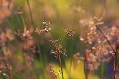 Natura zmierzchu Ciepły nastrój zdjęcie royalty free