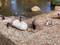 Natura zoo pingwinu oceanarium morze Zdjęcia Stock
