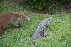 Natura, zwrotniki, Karaiby, Jukatan, Meksyk, resor Obrazy Royalty Free