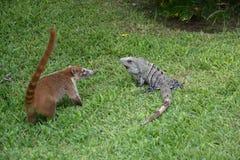 Natura, zwrotniki, Karaiby, Jukatan, Meksyk, resor Zdjęcie Stock