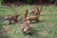 Natura, zwrotniki, Karaiby, Jukatan, Meksyk, resor Zdjęcia Stock
