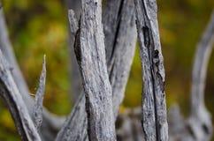 Naturabstrakt begrepp – naturligt ridit ut trä arkivfoto