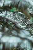Naturaffisch Gräsplan gömma i handflatan förgrena sig closeup Tropisk vibes royaltyfri foto