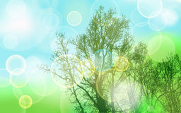 Natural abstract background with trees Stock Photos