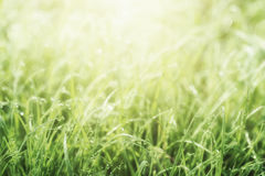 Natural abstract sunny background Royalty Free Stock Photo