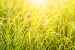 Natural abstract sunny background Royalty Free Stock Photography