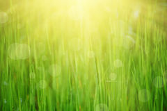 Natural abstract sunny background Royalty Free Stock Image
