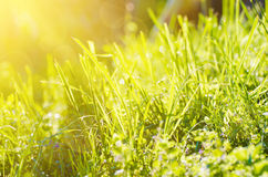 Natural abstract sunny background Royalty Free Stock Images