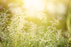 Natural abstract sunny background Stock Photography