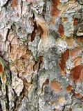 Natural Abstract. This is the texture of bark on a tree that shows the beautiful textures and colors of life that is before us Royalty Free Stock Image