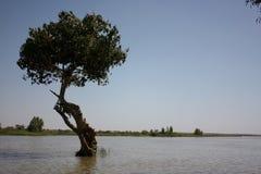 Africa landscape. The natural Africa river  landscape Stock Photo