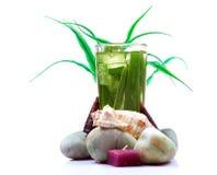 Natural alovera juice Royalty Free Stock Photography