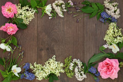 Natural Alternative Medicine Border Stock Photography
