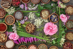 Natural Alternative Medicine. Large dried and fresh herb and flower collection used in natural alternative medicine stock image