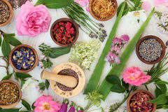 Natural Alternative Medicine. Selection with fresh and dried flowers and herbs on distressed white wood background royalty free stock photography
