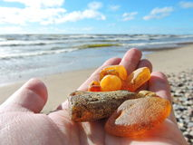 Free Natural Amber On Baltic Sea Coast, Lithuania Royalty Free Stock Photography - 91377347