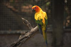 The beautiful parrot on the wood stock image