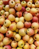 Natural apples stock image