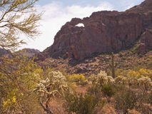 Natural arch in desert vista. Natural arch in cliff side in the Ajo Mountains with desert vegetation including saguaro and cholla cactus and blooming Palo Verde Royalty Free Stock Photography
