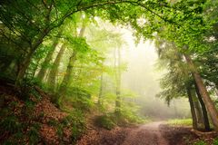 Natural archway of trees. Scenic forest landscape with a large natural archway composed of green trees over a path inviting into the misty light Stock Images