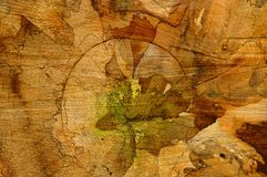 Natural art. Cut old tree trunk showing an abstract picture of different color layers Royalty Free Stock Image