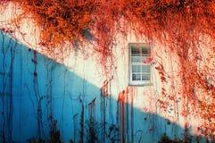 Autumn art wall Stock Photography