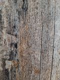 Dry tree bark texture background royalty free stock images