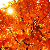 Natural autumn background Royalty Free Stock Images