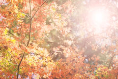 Natural autumn background Royalty Free Stock Photos