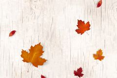 Natural Autumn background design. Autumn leaf fall, autumnal falling leaves on white wooden background. Vector autumnal Stock Photography