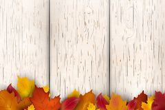 Natural Autumn background design. Autumn leaf fall, autumnal falling leaves on white wooden background. Vector autumnal. Foliage fall of maple leaves royalty free illustration