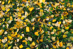 Natural autumn background of yellow leaves Stock Photography
