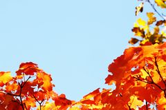 Natural Autumn Frame Royalty Free Stock Photography
