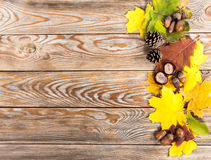 Natural autumn frame. Stock Photography