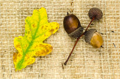 Natural autumn objects at burlap Stock Image
