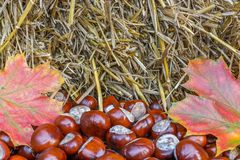 Natural autumnal background of hay, chestnuts and autumn leaves royalty free stock photo