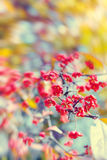 Natural autumnal blurred background with flowers Royalty Free Stock Photos