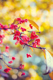 Natural autumnal blurred background with flowers Royalty Free Stock Photo