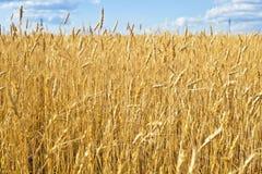 Natural backdrop Stock Image
