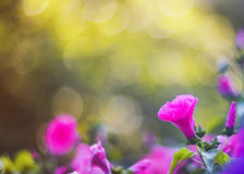 Natural backdrop of fragrant pink flowers, shiny rain and sun glare Stock Photo