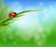 Natural background Royalty Free Stock Photos