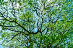 Beautiful fresh green tree background Royalty Free Stock Photography